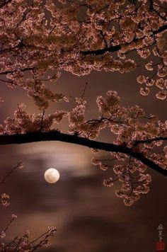 Le cose più belle di questo mondo sono quelle create da madre natura… (Emiko Kato, L'Eleganza dell'Anima)