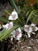 Southern Oregon Wildflowers   ASHLAND GARDEN CLUB