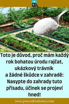Garden Club, Diy And Crafts, Outdoor Decor, Planting Vegetables, Milan, Growing Vegetables