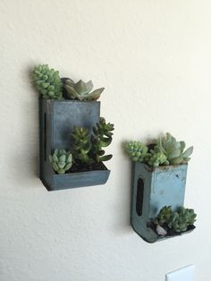 Old matchboxes used for succulent planters