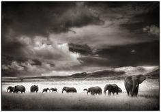 Nick Brandt, Elephant Herd, Serengeti