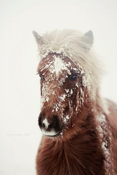 Cute fuzzy pony in the winter snow.