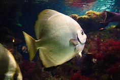Vis in aquarium Fish