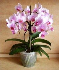 Náhodně vybraná fotografie Gerbera, Garden, Google, Flower Arrangements, Plants, Garten, Lawn And Garden, Gardens, Gardening