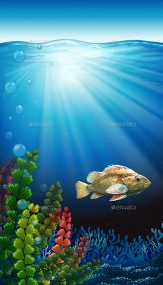 12 best coral reefs images coral reefs underwater photos under rh pinterest com