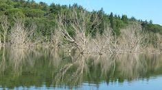 La foresta sommersa di Poggio Perotto