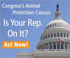 Congress's Animal Protection Caucus