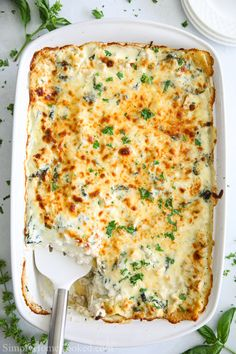 Easy Alfredo Chicken Lasagna This easy Chicken Alfredo Lasagna is made with rotisserie chicken, alfredo sauce, and mozzarella cheese. This recipe will please any of your family or friends. Chicken Spinach Lasagna, Lasagna Recipe With Ricotta, White Chicken Lasagna, Easy Lasagna Recipe, Spinach Stuffed Chicken, Buffalo Chicken Lasagna, Lasagna Soup, Zucchini Lasagna, Pollo Alfredo