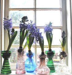 Collecting: Hyacinth Forcing Vases — The Gardenist