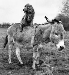 """Dog just complimented Donkey's pin straight mane, while Donkey's all like, """"No, no, no I love your natural curls."""""""