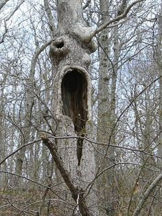 screaming tree - good example of paredolia for Surrealism lesson!