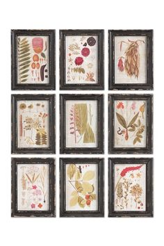 Hotel Duvaleix White & Black Botanical Prints - Set of 9 by Napa Home and Garden on @HauteLook
