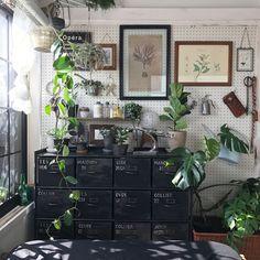 窓際のグリーン/壁/天井/ペグボード/有孔ボード/6畳/観葉植物…などのインテリア実例 - 2016-12-09 12:03:29 | RoomClip(ルームクリップ)