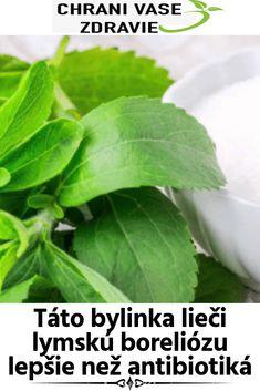 Táto bylinka lieči lymskú boreliózu lepšie než antibiotiká Stevia, Detox, Plant Leaves, Herbs, Plants, Food, Essen, Herb, Meals