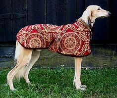 Elegant Dog Coats, sighthound Dog Coats, Posh Pawz - these folks have exquisite collars for Salukis as well.
