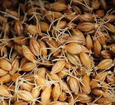 ¿Qué son las enzimas de la malta?   Cerveza Artesana Homebrew, S.L.