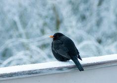 Herzenswärme Winter, Animals, Inspiration, Heart, Winter Time, Biblical Inspiration, Animales, Animaux, Animal
