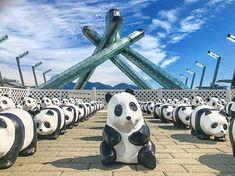 100 adorable papier-mâché #Pandas  @vanconventions #JackPoolePlaza #Vancouver  #1600PandasPlusCa #1600PandasPlus #1600PandasWorldTour @wwfcanada