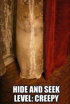 50 Best Cat Memes - Funny Cat Memes
