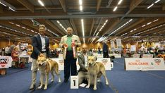 Fossombrone vince 5 titoli europei all'European Dog Show di Wels 🇦🇹🏆🏆🏆🏆🏆🎉 Dog Show, Fair Grounds, Travel, Wels, Viajes, Destinations, Traveling, Trips, Tourism