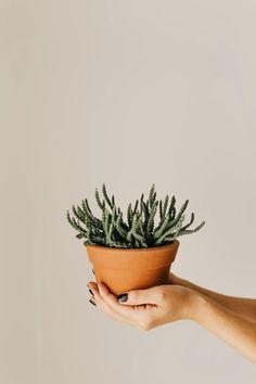 My Lovers 4 Formidable Wedding Photos Green Aloe Vera Plant On Brown Pot Silk S
