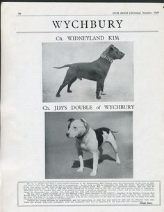 STAFFORDSHIRE BULL TERRIER OUR DOGS VINTAGE 1949