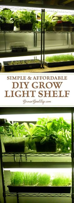 Growing plants indoors is an enjoyable project for any gardener. Whether you want to grow herbs indoors, start your garden seedlings, cultivate an indoor garden, or provide some supplemental light to your houseplants during winter, this inexpensive DIY grow light shelf will help you raise healthy plants.: