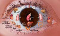 iridología. Ciencia que estudia el iris, revela los desórdenes patológicos y funcionales de nuestro organismo por medio de líneas y puntos anormales y...