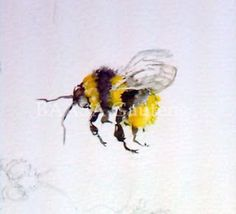 """Botanical Artists Association of Southern Africa: Sheila Santilhano's """"Bees, Butterflies and Birds"""" Workshop - February 2009"""