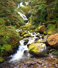 Waterfalls and streams galore... An amazing trip to the Olympic National Forest in Washington State! I stayed at the Lake Quinault Lodge and explored the temperate rainforest. Magical....