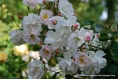 Mon Jardin Mes Merveilles: Zoom sur... Sourire d'Orchidée