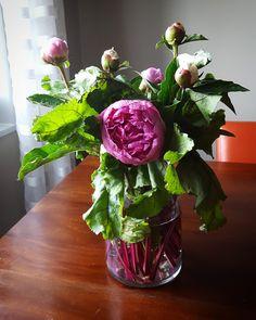 Flower arrangement: peonies and beet greens!