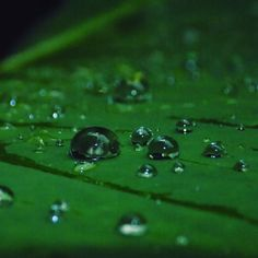 #raindrops #waterdrops #gogreen #greens #drop #insta #instagood #naturephotography #natura #photography #after #lit #water #rain #charm #clear