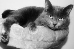 Black and White **~~TaLLuLaH KiTtY~~**