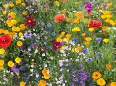 Pour sauver les abeilles, plantez ces 23 fleurs mellifères dans votre jardin.