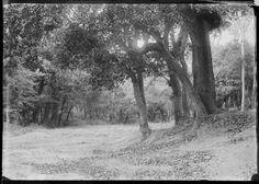 Catalunya 1900, boscos