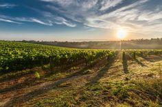 Weingüter und Weinhänge mit der fantastischen toskanischen Landschaft sind der perfekte Rahmen für romantische Hochzeiten