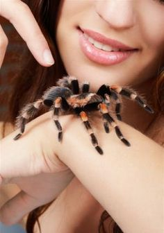 A single brief therapy session for adults with a lifelong debilitating spider phobia resulted in lasting changes to the brain's response to fear.