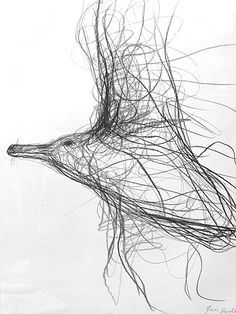 Herring Gull on the Turn  Graphite on 300gm acid free paper. Jason Gathorne-Hardy