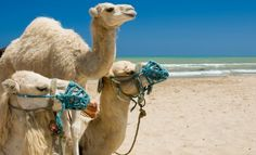 - My Country  #Tunisia #camels #beach #sea