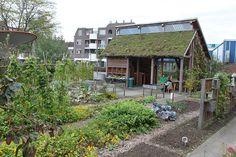 Hollannissa ei vain kampanjoida vaan tehdään elävää ympäristöä | Asuntomessut