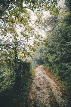 Path in the woods (no location given) by Elena Morelli cr. Beautiful World, Beautiful Places, Nature Sauvage, Green Gables, Pathways, The Great Outdoors, Mother Nature, Countryside, Nature Photography
