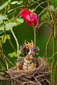 Beautiful little birds ~ awwww amazing