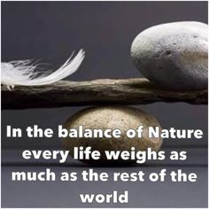 Wishes, Messages, Greetings....: Balance of nature