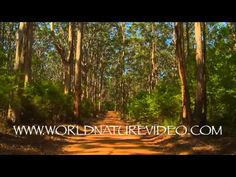 Virtual Walk DVD - Fitness Journeys - Through the Forest  4:49