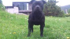 My Black Pearl :)