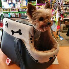#yorkie #kutya #kutyabarat #yorkshireterrier www.facebook.com/everybodri