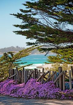 Carmel-By-The-Sea ~ Many fences inCarmelhave wooden pickets that are intentionally misaligned to give the impression that the fence is very old. Photo © copyright by Mike Barton.