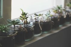 baby food jars and succulents