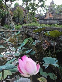Lotus Temple Ubud, Bali